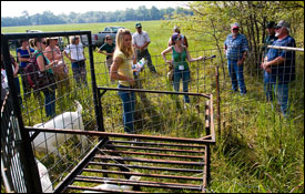 Field Reporting on Feral Hogs