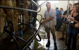 Milking Cows at Kitten Creek Dairies
