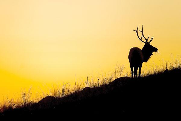 Return of Elk