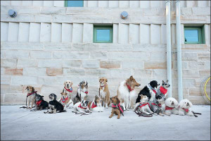 """Doggy Drill Team Poses for a Photo"" by Kayla Kauffman."
