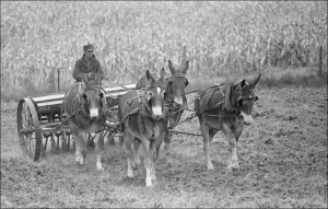 """""""Missouri Mules and Men"""""""