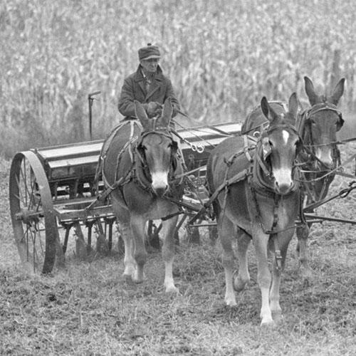 Missouri Mules and Men