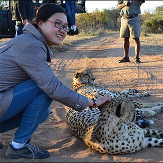 Yizhu Wang with Cheetahs